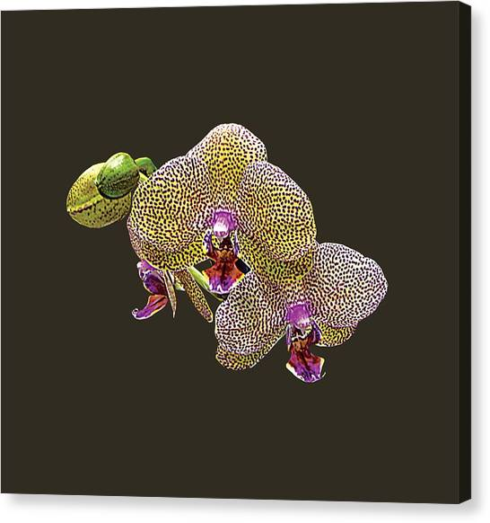 Yellow Spotted Orchid Canvas Print by Susan Savad