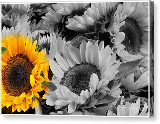 Yellow Sunflower On Black And White Canvas Print