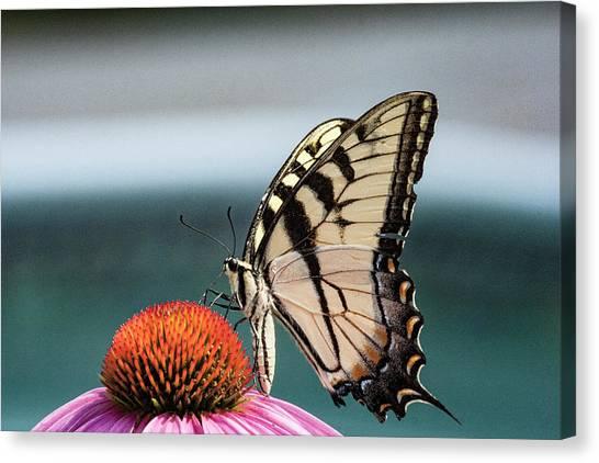 Yellow Swallowtail II Canvas Print
