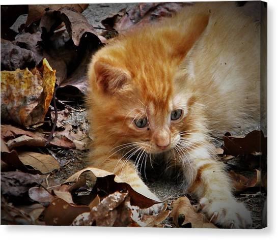 Yellow Tabby Kitten Canvas Print