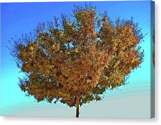 Yellow Tree Blue Sky Canvas Print