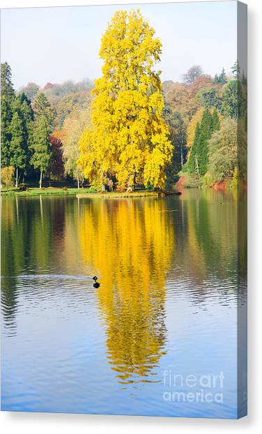 Yellow Tree Reflection Canvas Print