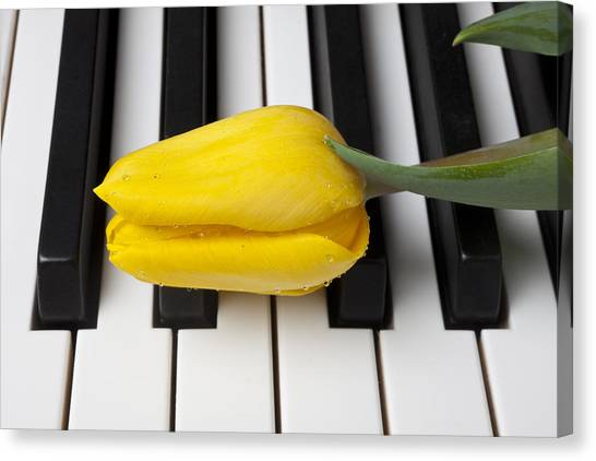 Compose Canvas Print - Yellow Tulip On Piano Keys by Garry Gay