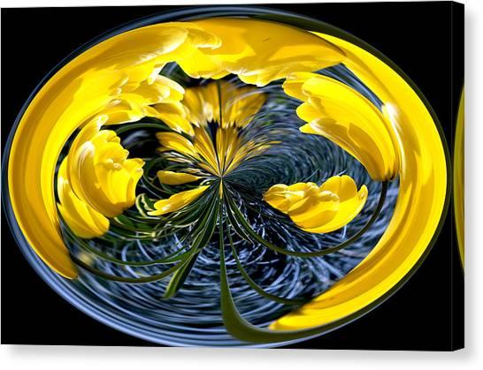 Yellow Tulip Canvas Print by Robert  McCord