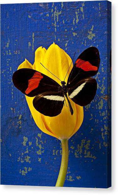 Tulips Canvas Print - Yellow Tulip With Orange And Black Butterfly by Garry Gay