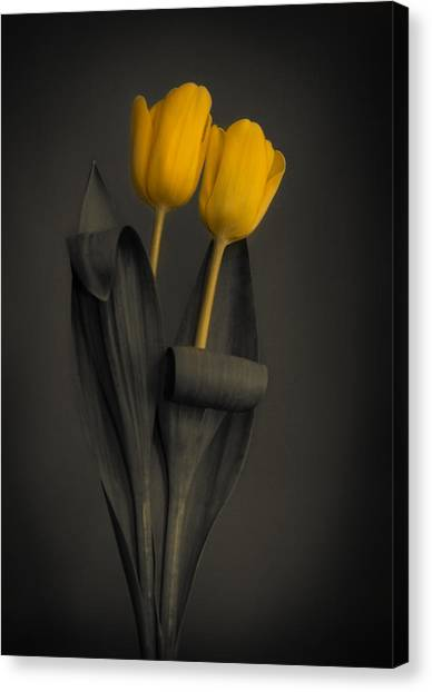 Yellow Tulips On A Grey Background Canvas Print