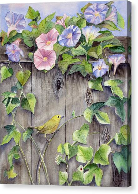 Yellow Warbler And Morning Glory Canvas Print by Patricia Pushaw