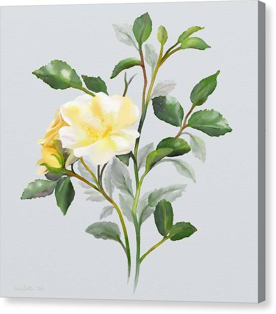 Canvas Print featuring the painting Yellow Watercolor Rose by Ivana Westin