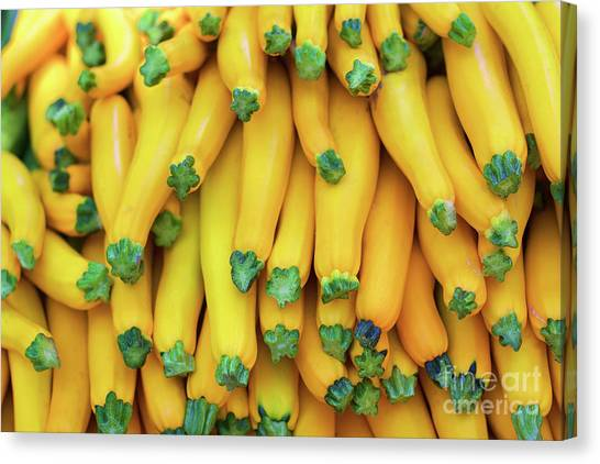 Yellow Zucchini Canvas Print