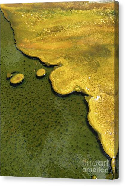 Yellowstone Art. Yellow And Green Canvas Print