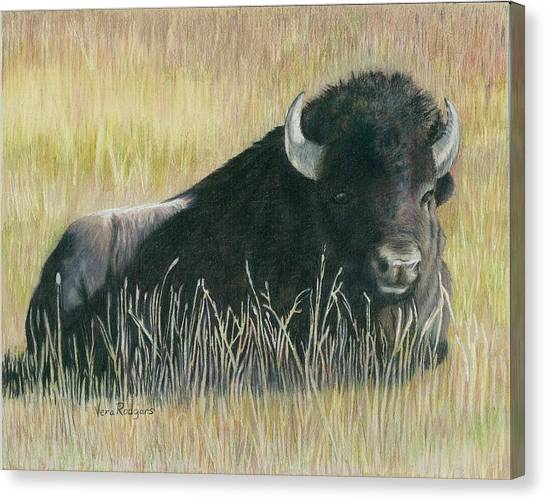 Yellowstone Loner Canvas Print by Vera Rodgers