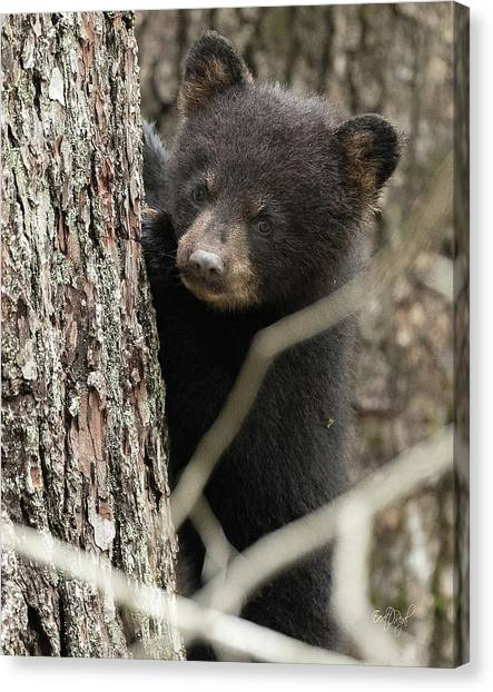 Black Bears Canvas Print - Yes, Mom by Everet Regal