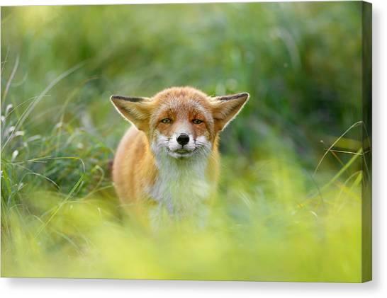 Yoda Canvas Print - Yoda - Funny Fox II by Roeselien Raimond