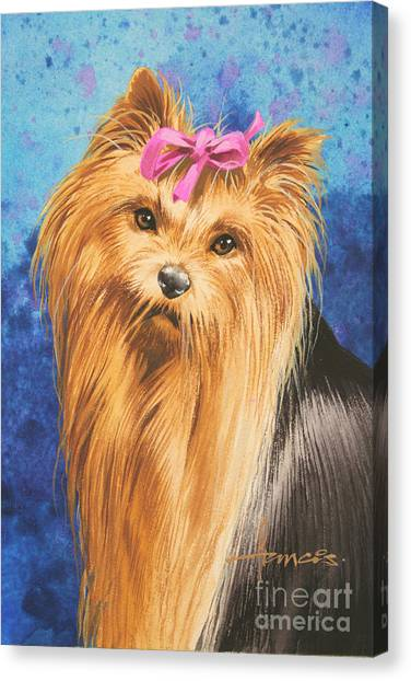 Yorkshire Terrier Canvas Print - Yorkie by John Francis