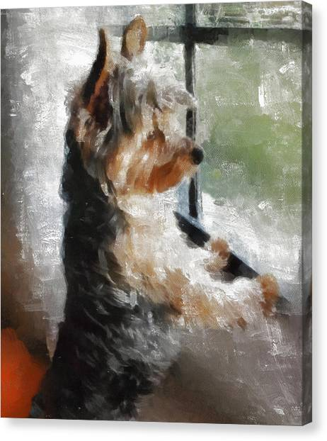 Yorkshire Terrier Canvas Print - Yorkshire Terrier  Its Warm In Here But So Much More Interesting Out There by JG Keevil