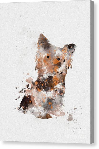 Yorkshire Terrier Canvas Print - Yorkshire Terrier by Rebecca Jenkins