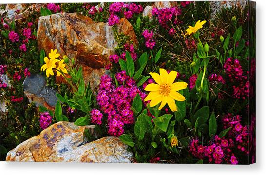 Yosemite Wildflowers Canvas Print