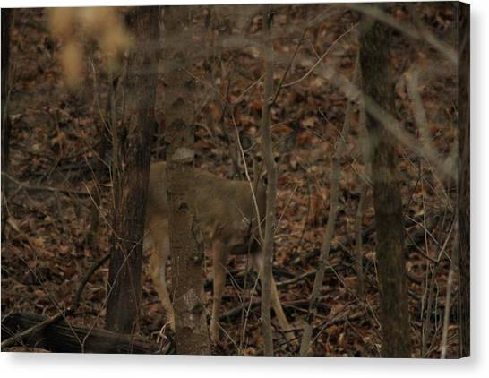 I See You  Canvas Print by Charles Cook