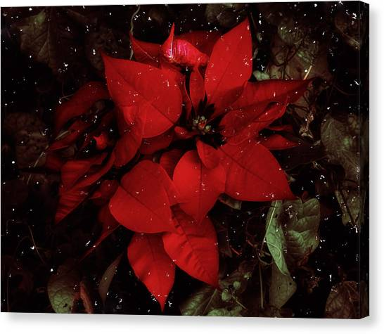 Canvas Print featuring the photograph You Know It's Christmas Time When... by Elaine Malott