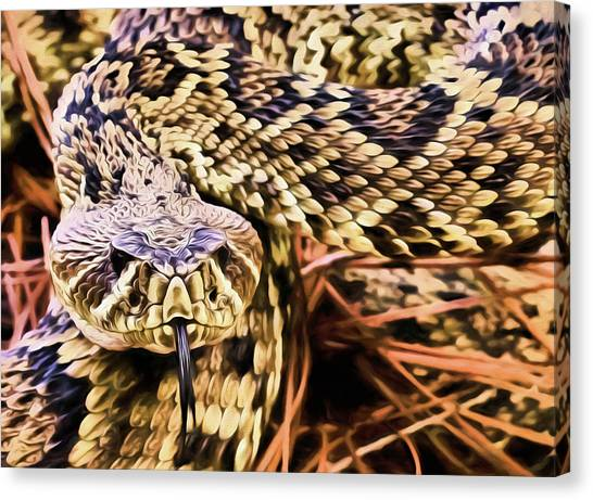 Poisonous Snakes Canvas Print - You Lookin At Me by JC Findley