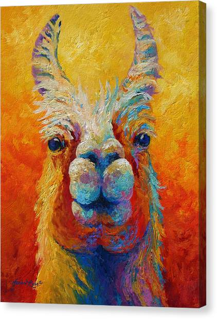 Llama Canvas Print - You Lookin At Me by Marion Rose