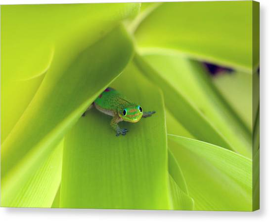 You Looking At Me Buddy Canvas Print