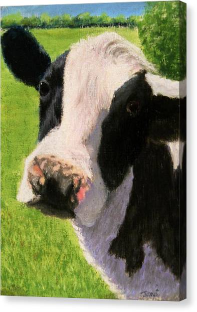 You Looking At Me Cow Painting Canvas Print by Joan Swanson