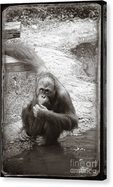 Canvas Print featuring the photograph You Looking At Me by Sandy Adams