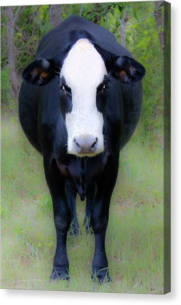 You Look'n At Me? Canvas Print
