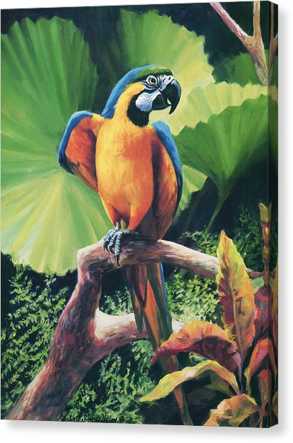 Macaws Canvas Print - You Got To Be Kidding by Laurie Hein