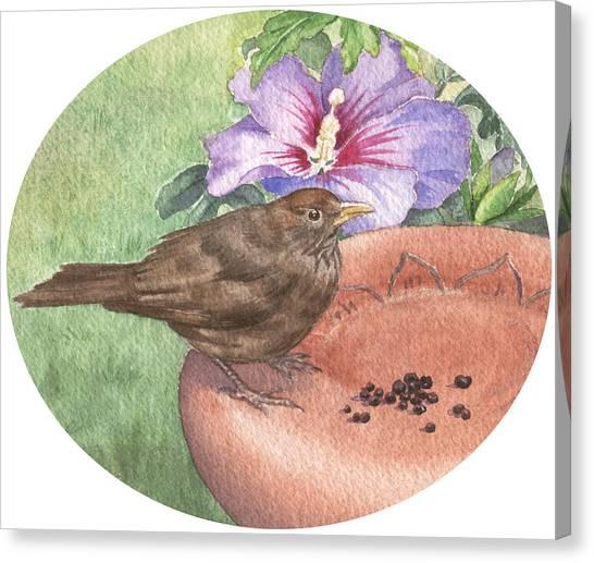 Young Blackbird After Raisins Canvas Print by Maureen Carter
