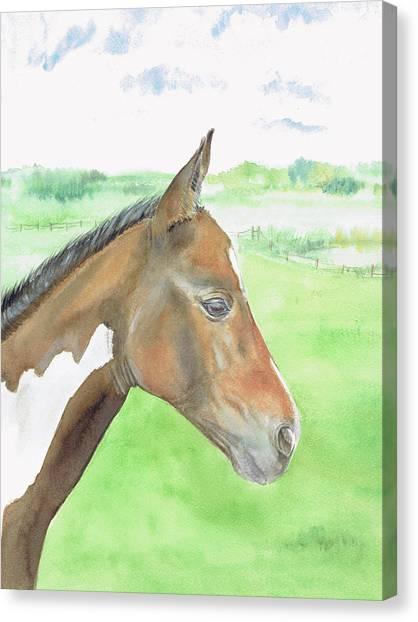 Young Cob Canvas Print