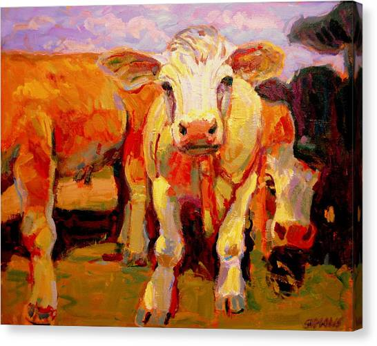Young Cow Canvas Print by Brian Simons