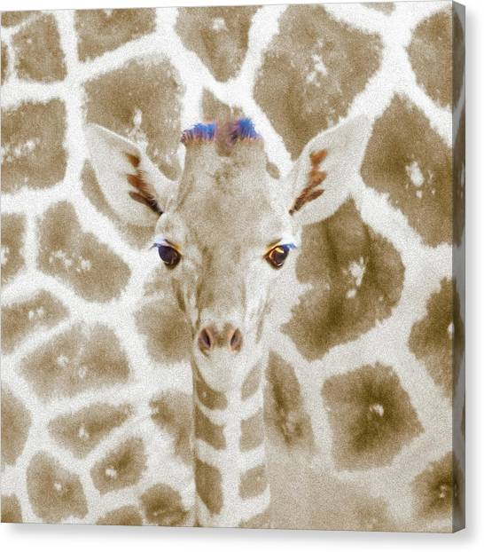Young Giraffe Canvas Print