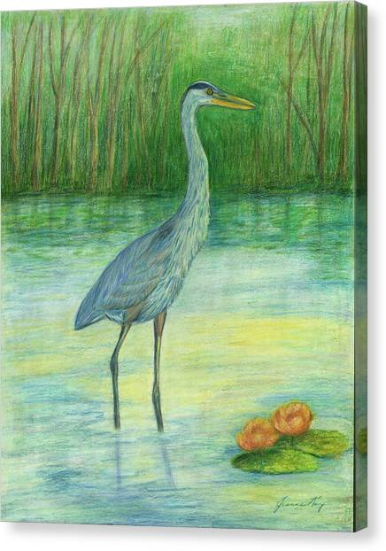 Young Great Blue Heron Canvas Print