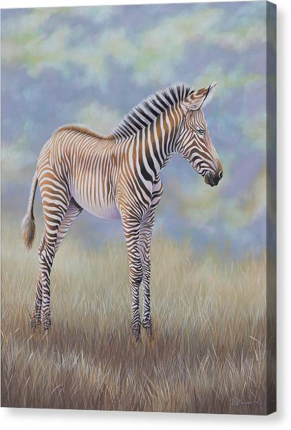 Young Grevy Zebra Canvas Print