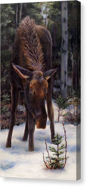 Young Moose And Pussy Willows Springtime In Alaska Wildlife Painting Canvas Print