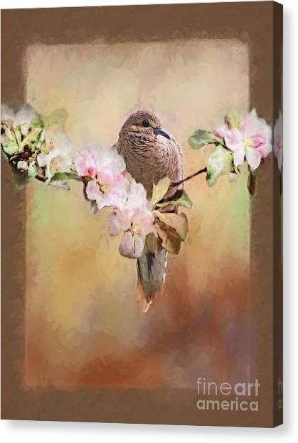 Young Morning Dove Canvas Print