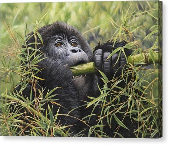 Young Mountain Gorilla Canvas Print
