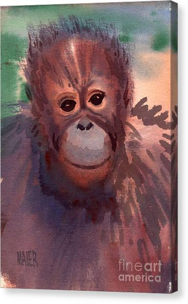 Orangutans Canvas Print - Young Orangutan by Donald Maier