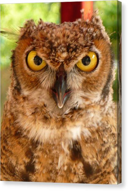 Young Owl Canvas Print by Jan Bennicoff