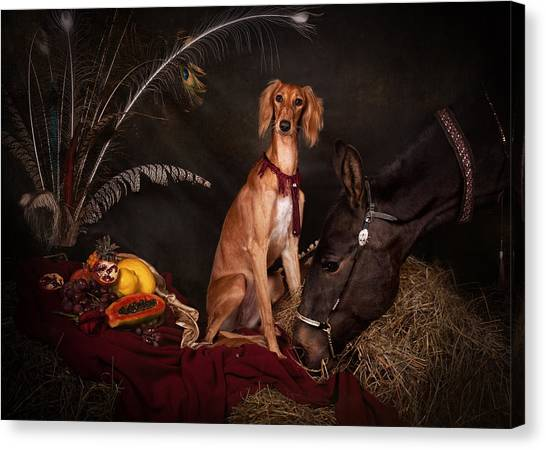 Canvas Print - Young Saluki Dog With A Horse by Tanya Kozlovsky
