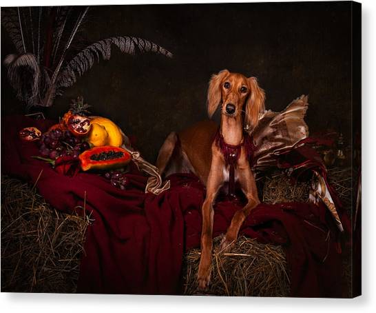 Canvas Print - Young Saluki Dog With Fruits by Tanya Kozlovsky