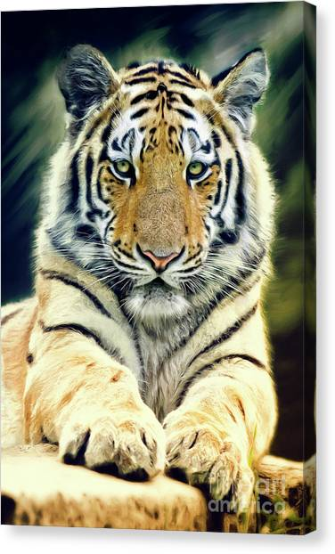 Young Tiger Canvas Print