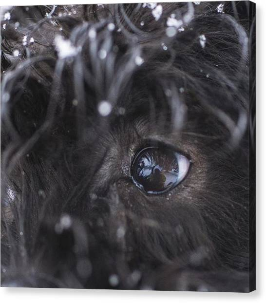 Puppies Canvas Print - Your Eyes Don't Have To Be Open To See by David Haskett II