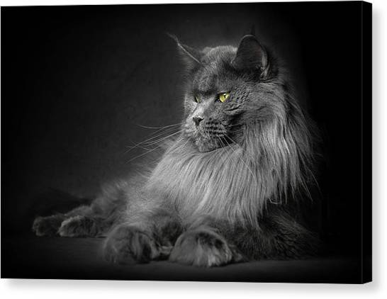 Canvas Print featuring the photograph Your Majesty. by Robert Sijka