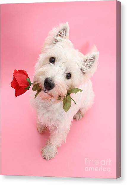 Your Valentine Every Day Canvas Print