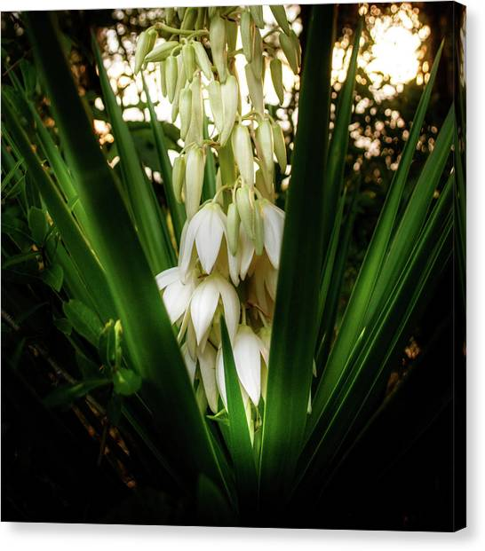 Yucca In The Woods Canvas Print