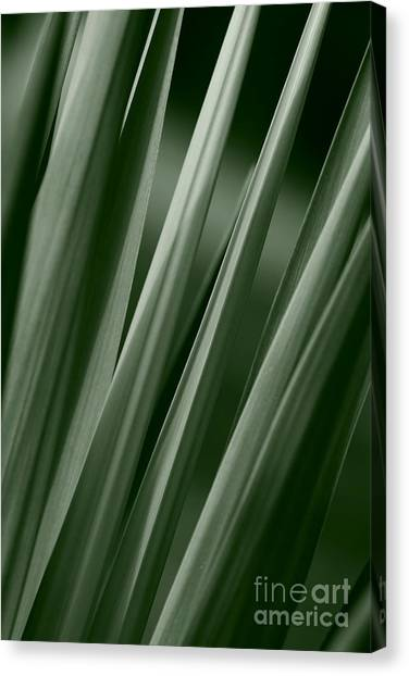 Yucca Spikes Canvas Print by Jeannie Burleson