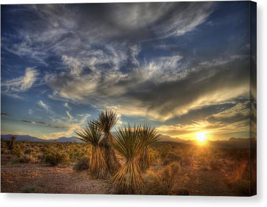 Yucca Sunset Canvas Print